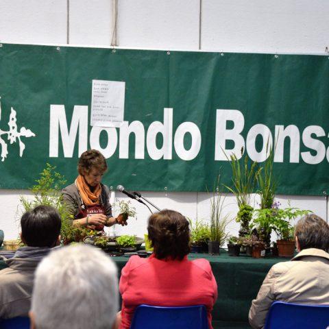 mondo-bonsai-2016-parte1-05