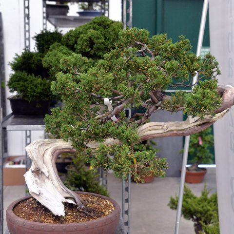mondo-bonsai-2016-parte1-16