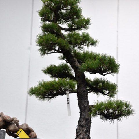 mondo-bonsai-2016-parte1-19