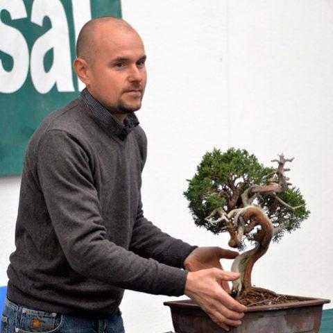mondo-bonsai-2016-parte1-21