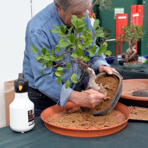 mondo-bonsai-2016-parte1-23