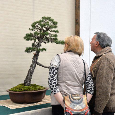 mondo-bonsai-2016-parte1-26