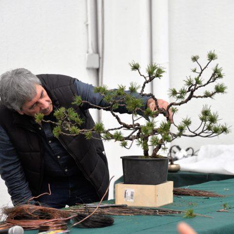 mondo-bonsai-2016-parte1-29