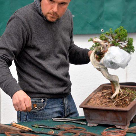 mondo-bonsai-2016-parte1-30