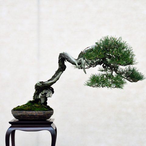 mondo-bonsai-2016-parte2-05