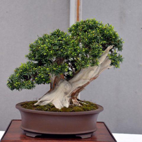 mondo-bonsai-2016-parte2-09