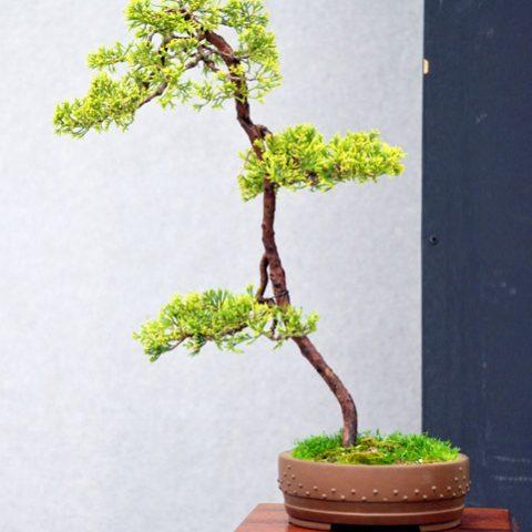 mondo-bonsai-2016-parte2-10
