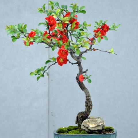 mondo-bonsai-2016-parte2-11