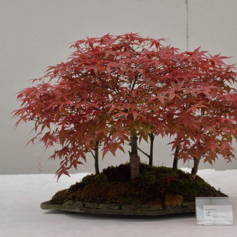 mondo-bonsai-2016-parte2-13
