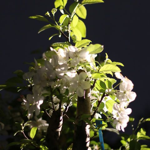 mondo-bonsai-2017-01