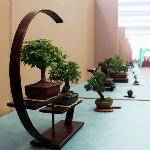 mondo-bonsai-2017-02