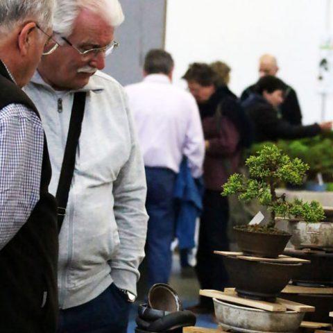 mondo-bonsai-2017-10