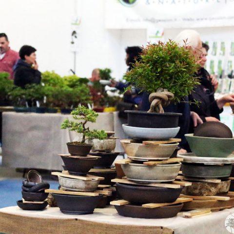 mondo-bonsai-2017-11