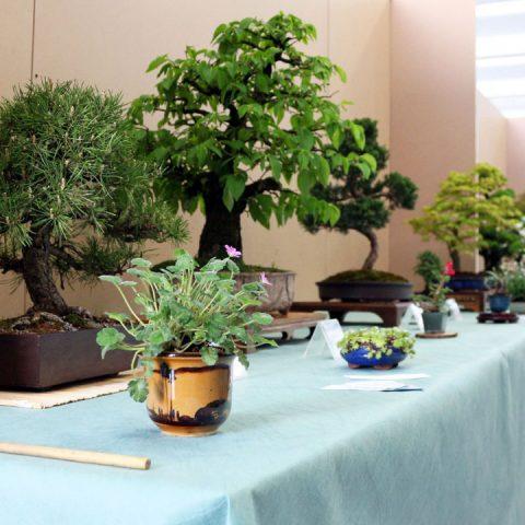 mondo-bonsai-2017-13