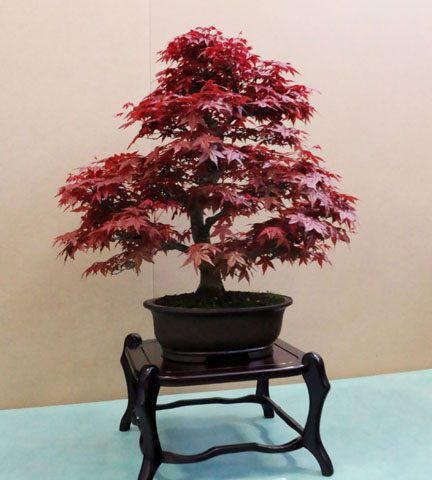 mondo-bonsai-2017-19