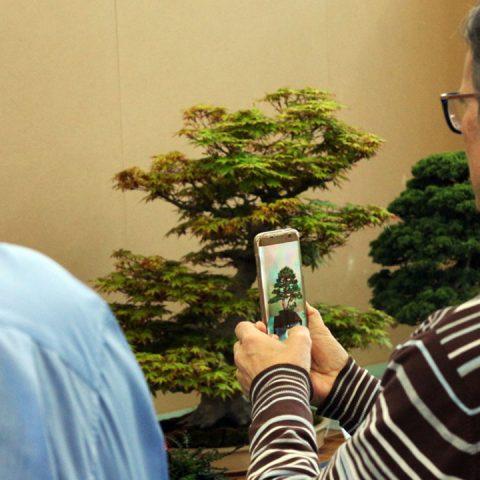 mondo-bonsai-2017-21