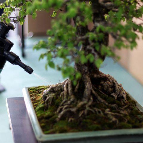 mondo-bonsai-2017-24