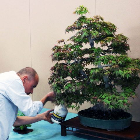 mondo-bonsai-2017-29