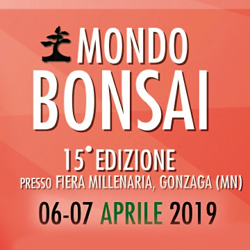 Mondo Bonsai 2019